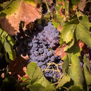 Wine tour Sardinia